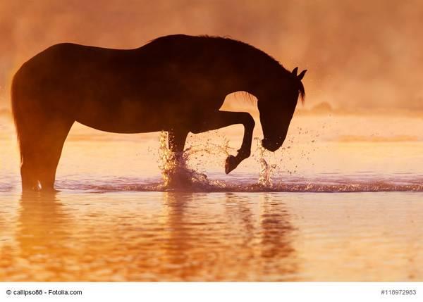 Marktführer: Unternehmen im Himmel – Beine auf dem Boden